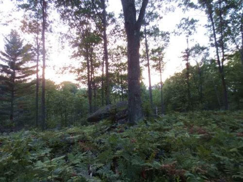 44.50 Beautiful Acres : Newbold : Oneida County : Wisconsin