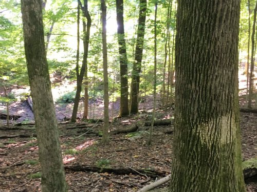 Bakers Grove Road : Hermitage : Davidson County : Tennessee