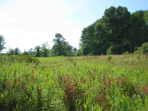 Building Lot Near Seneca Lake : Montour Falls : Schuyler County : New York