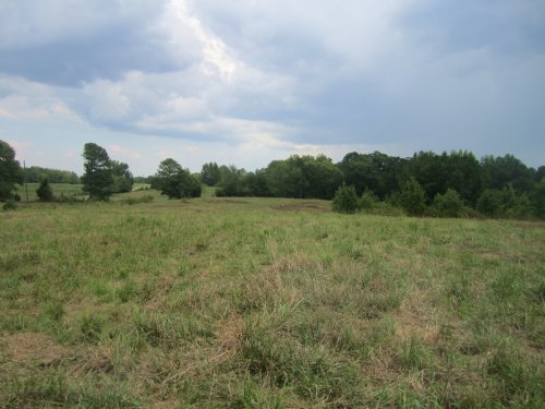 40 Acres Of Pasture Land : Falkville : Morgan County : Alabama