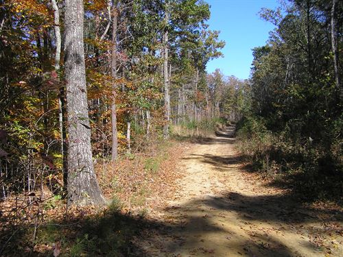 3 Acres, Woods, No Restrictions : Altamont : Grundy County : Tennessee