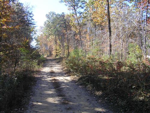 5 Acres, Woods, No Restrictions : Altamont : Grundy County : Tennessee