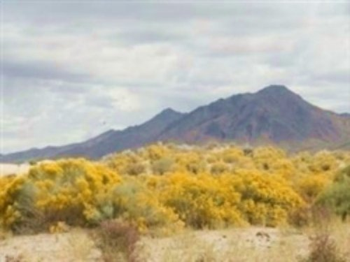 40 Acres Near Winnemucca. Terms $16 : Winnemucca : Humboldt County : Nevada
