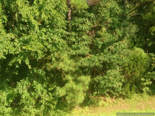 1.17± Ac Commercial Lot : Brandon : Rankin County : Mississippi
