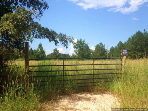20.5± Acres : Brandon : Rankin County : Mississippi
