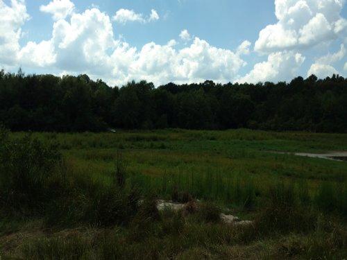 County Rd 308 Tract : Troy : Coffee County : Alabama