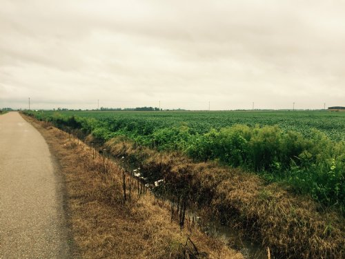50 Acres +/- Farmland : Blytheville : Mississippi County : Arkansas