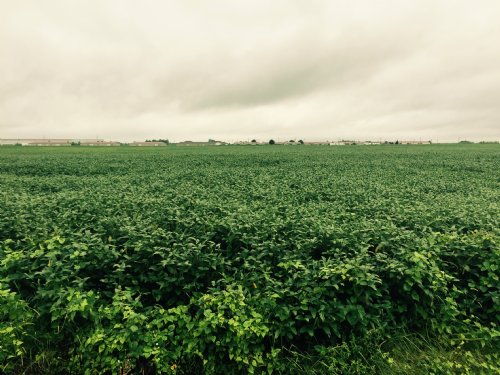42 Acres +/- Farmland : Blytheville : Mississippi County : Arkansas