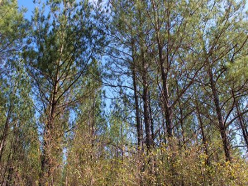 40 Acres For Hunting : Waycross : Ware County : Georgia