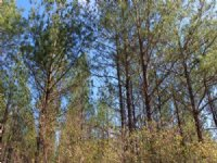 40 Acres For Hunting : Waycross : Ware County : Georgia