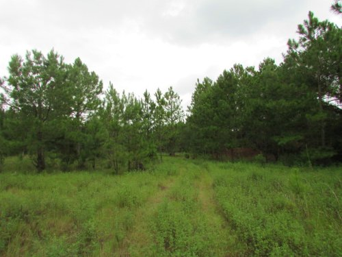 21.21 Acres : Tifton : Tift County : Georgia