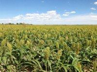 Catlin Irrigated Farm : La Junta : Otero County : Colorado
