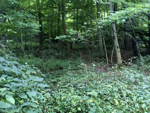 Home Would Be Perfect For Hunters : Decatur : Van Buren County : Michigan