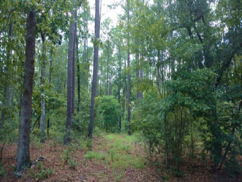 8.5 Ac South Island Road : Georgetown : South Carolina