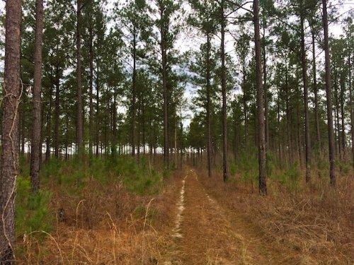 Steele Creek Tract : Davisboro : Washington County : Georgia