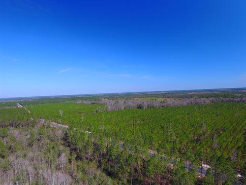 93.67 Acre Pine Plantation : Waynesville : Brantley County : Georgia