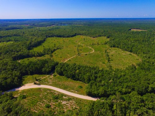 151 Acre Homesite / Recreational : Bloomingdale : Chatham County : Georgia