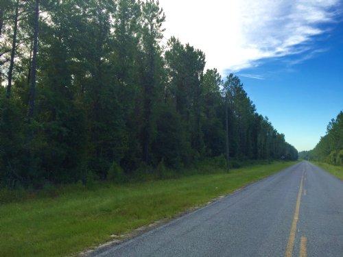 35 Ac Pristine Pine Plantation : Waynesville : Brantley County : Georgia
