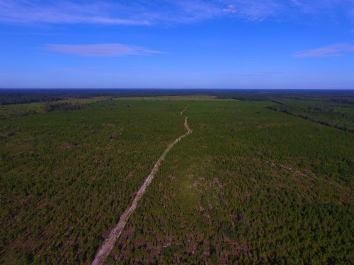 145 Acre Pine Plantation : Pembroke : Bryan County : Georgia