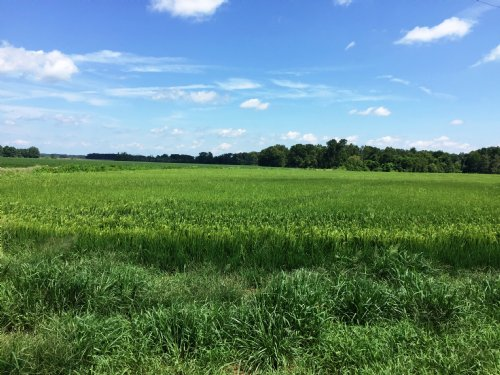 202 Acre Row Crop Farm / Timberland : Tichnor : Arkansas County : Arkansas