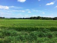 202 Acre Row Crop Farm / Timberland : Tichnor : Arkansas County : Arkansas