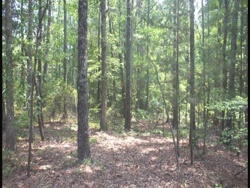 80 Acres In Attala County : McCool : Attala County : Mississippi