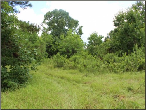 47 Acres In Amite County : Liberty : Amite County : Mississippi