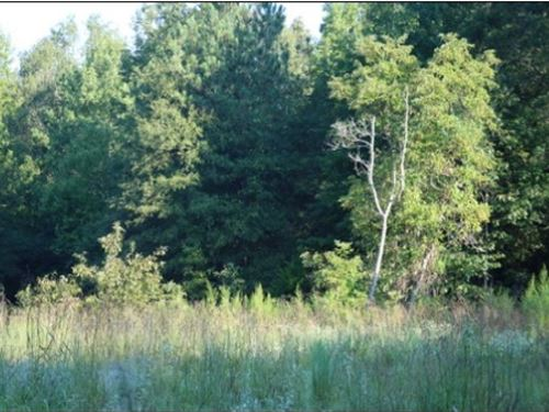 119 Acres In Winston County : Noxapater : Winston County : Mississippi