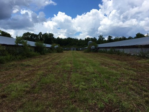 40± Acres : Richton : Perry County : Mississippi
