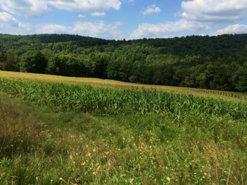 175 Acres Farmland Timberland : Independence : Allegany County : New York
