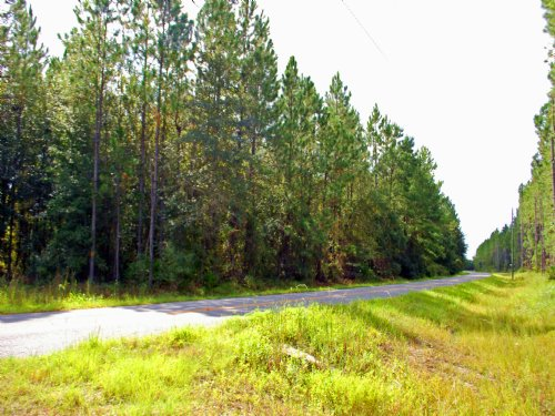 9.7 Acres Build Or Hunt A-511 : Starke : Bradford County : Florida
