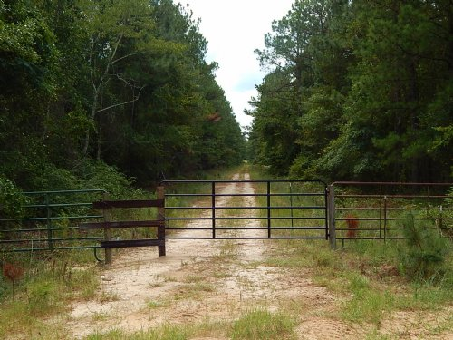 Wildlife & Timber Tract : Dublin : Laurens County : Georgia