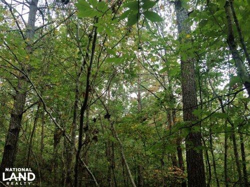 40 Acres Timber, Creek, Deer, And R : Mabelvale : Saline County : Arkansas