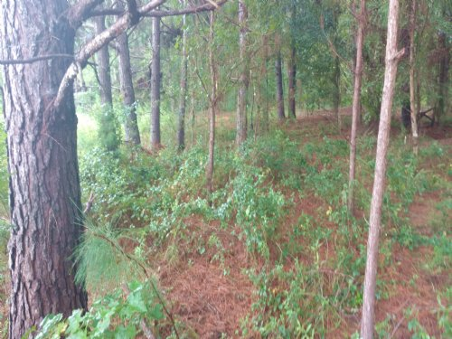 Barnes Road Tract : Ariton : Dale County : Alabama