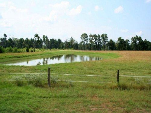 Stoneham 33 : Stoneham : Grimes County : Texas