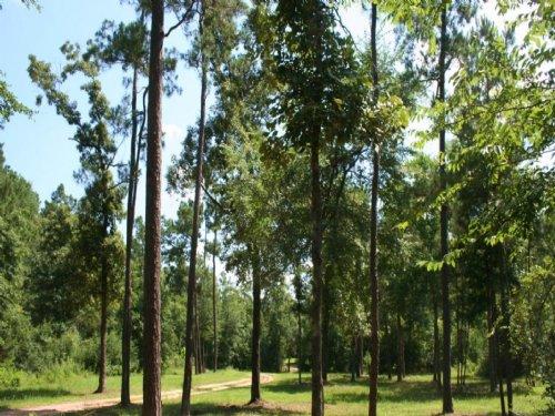 Century Ranch : Magnolia : Montgomery County : Texas