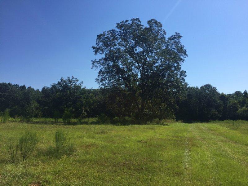 Sizemore Creek Tract : Atmore : Escambia County : Alabama