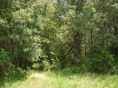 Beautiful Home-site For Sale : Powderly : Lamar County : Texas