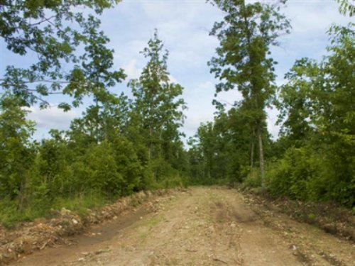 5.01 Acre Thunder Mountain Ranch : Birch Tree : Shannon County : Missouri