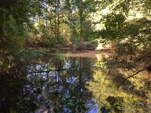 2.2 Wooded Acres With Pond : Morton : Scott County : Mississippi