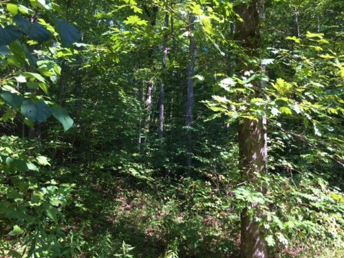111.45+/- Acres Hunting Property : Gruetli Laager : Grundy County : Tennessee