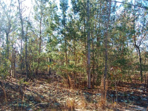 0.68 Acre In Keystone Heights : Keystone Heights : Clay County : Florida