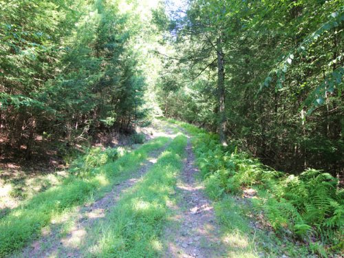 149+/- Acres Land In Benton : Benton : Columbia County : Pennsylvania