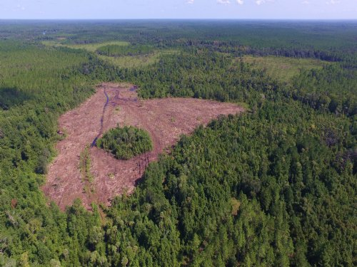 1077 Ac Timber / Recreational Land : Interlachen : Putnam County : Florida