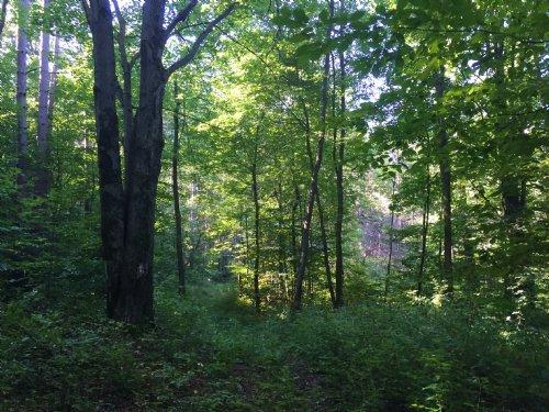 Southern Tier Hunting Tract : Lebanon : Chenango County : New York