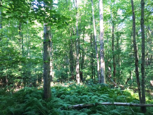 52 Acres Parish Ny Timberland : Parish : Oswego County : New York