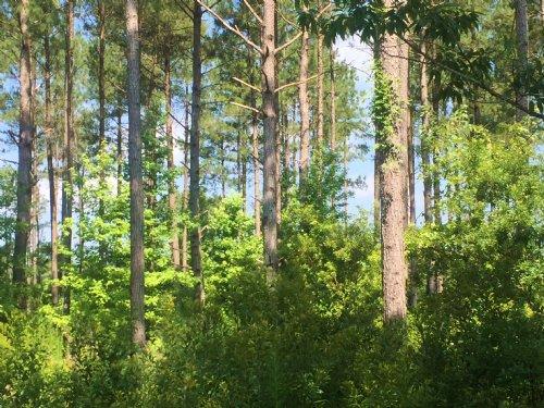 152 Acre Sportsman's Paradise : Smoaks : Colleton County : South Carolina