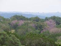 Pinon 27 : Rocksprings : Edwards County : Texas