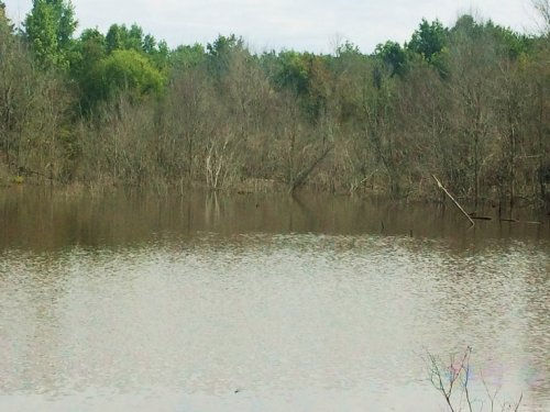 26 +/- Acres With A Pond : Banks : Pike County : Alabama