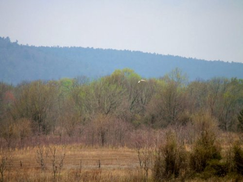 5.01 Ac Daisy Meadows, Electricity : Pittsburg County : Oklahoma